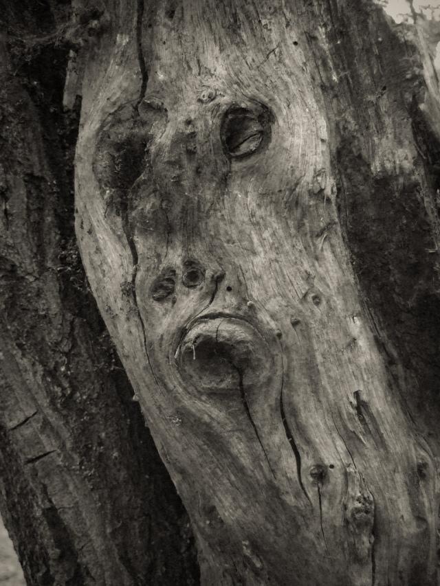 treefacebradwell